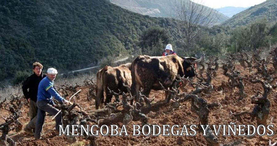 Mengoba Bodega y Viñedos